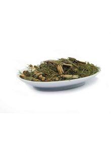 cavalinha-planta-equisetum-ssp