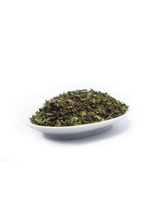 Manjericao-Ocimum-basilicum