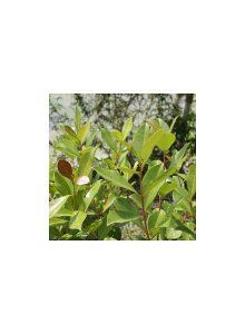 plantas-bio-aracaleiro