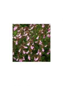 plantas-bio-carvalhinha1