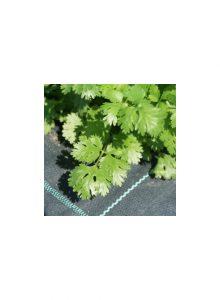 plantas-bio-coentros1