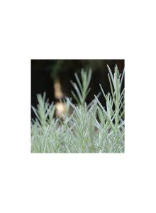plantas-bio-erva-do-caril
