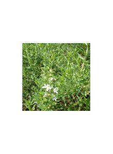 plantas-bio-segurelha-satureja-montana