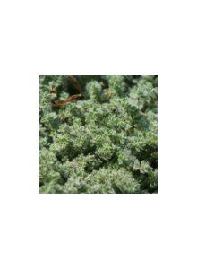 plantas-bio-tomilho-lanoso1