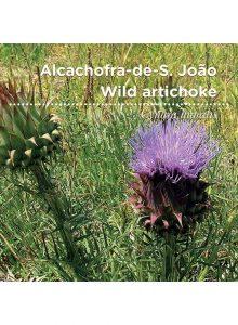 sementes-de-portugal-alcachofra-de-s.joao