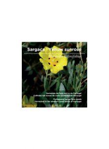 sementes-sargaca-yellow-sunrose