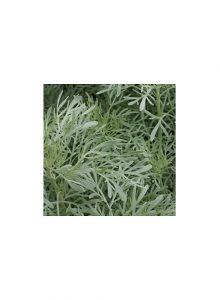 plantas-bio-artemisia-absinthium