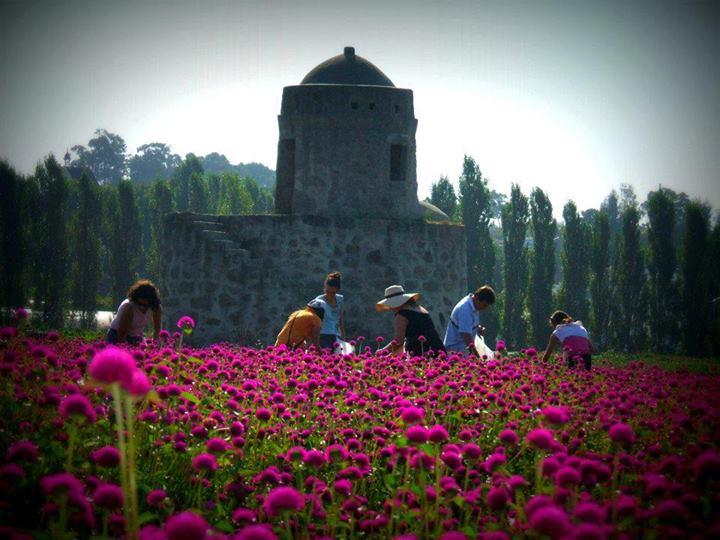 voluntarios-campo-perpetuas-roxas-cantinho-das-aromaticas