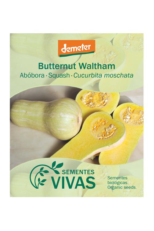 sementes-abobora-squash-butternut-sementes-vivas