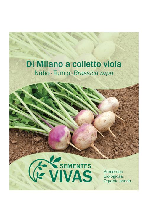 sementes-nabo-turnip-sementes-vivas