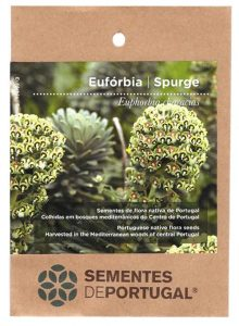 euforbia-sementes-portugal