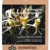 madressilva-sementes-portugal