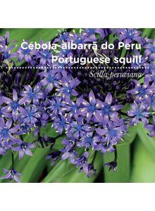 sementes-de-portugal-cebola-albarra-do-peru
