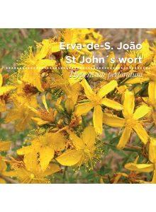 sementes-de-portugal-erva-de-s.joao