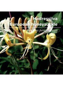 sementes-de-portugal-madressilva