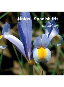 sementes-de-portugal-maios