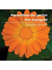 sementes-de-portugal-maravilhas-do-jardim