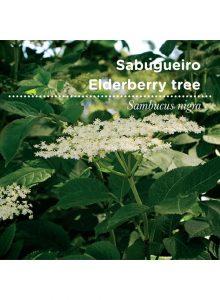 sementes-de portugal-sabugueiro