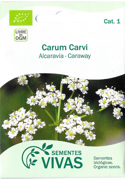 carum-carvi