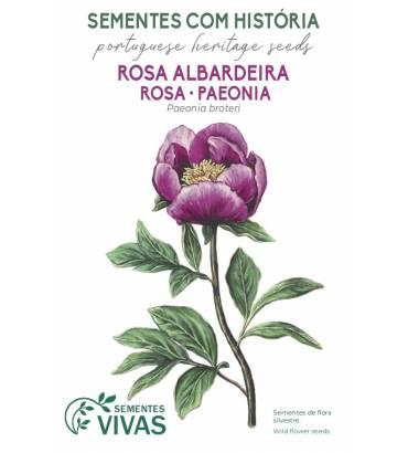 rosa-albardeira